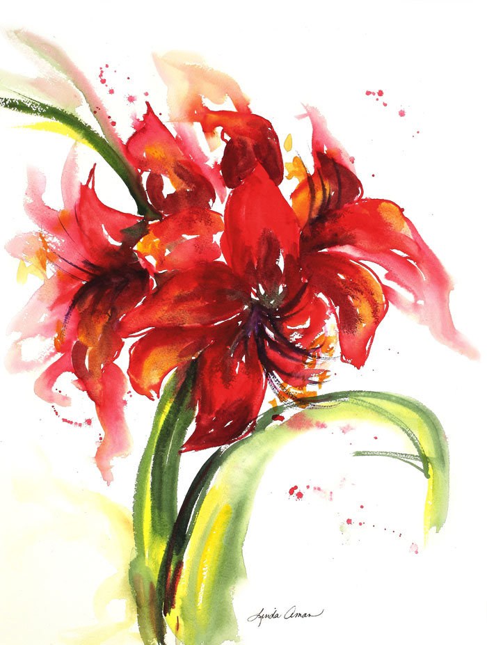 Amaryllis One