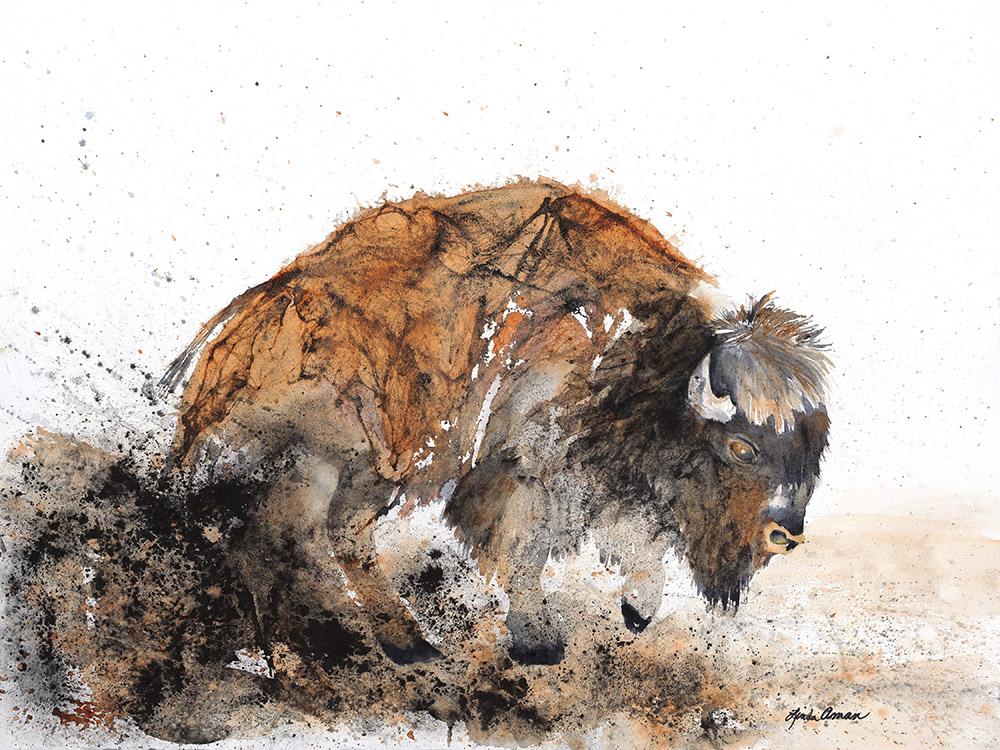 Bison - Fine Art Print